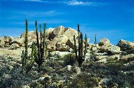 Desierto Central in Baja California